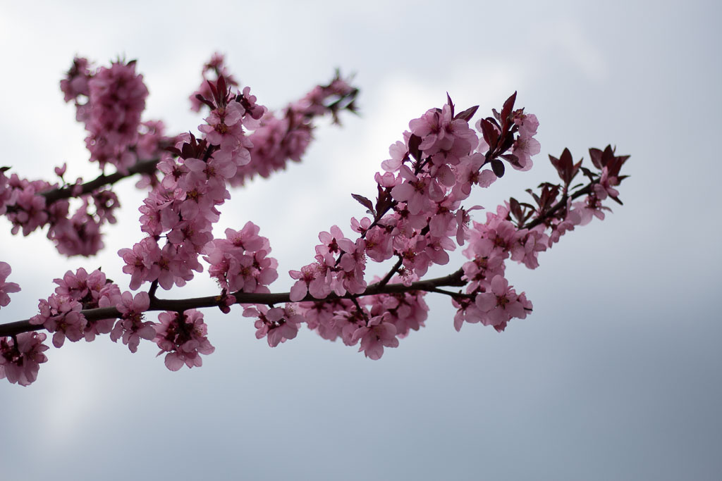 reasons to love spring spring blossom